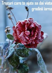 Trucuri care te ajuta sa dai viata gradinii iarna